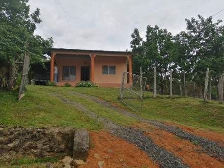 Affordable house with an Avocado Plantation, Cool Mountain weather 35 minutes from Las Tablas and the beaches