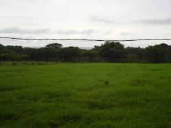 Development Opportunity - 5 ha. Ocean View Parcel, 900 mts. from the beach, Pocri, Azuero Peninsula
