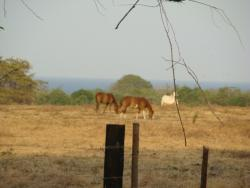 64 Hectares, Ocean Views, Pedasi, Azuero Peninsula