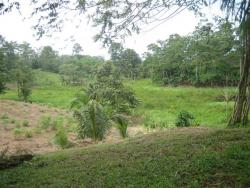 12 HA of land ideal for a botanical park, development.