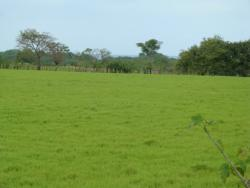 3000 m2 TITLED lot walking distance to the Ocean, Azuero Peninsula