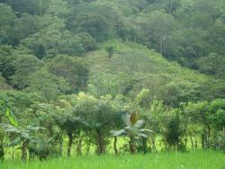 74 Acre Farm, Titled, 20 minutes from Las Tablas