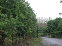 1+ and 2+ HA parcels of land for sale... The land boasts ocean Views, just 200 meters from Public Ramp and is also planted with Teak and Coconut