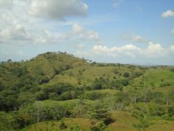 Outsatnding Farm For Sale In Chorrera