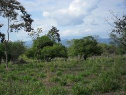 Exceptional Home Site and Hobby Farm for Sale, Titled Land