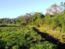 Working cattle farm with improved pasture