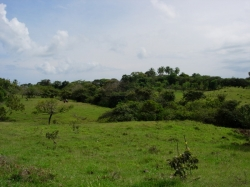 25 HA of land with pleasant views, live water, and rolling hills in Las Uvas of San Carlos