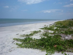 1 HA Beach Front Parcel, with High Density Zoning, Excellent Development Opportunity