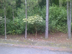 Half Acre Lot is Desirable Sub Division