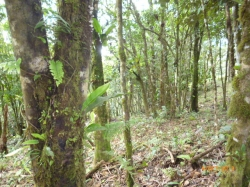 Very attractive price and even financing available! Beautiful lot with old trees in the highlands of Altos del Maria