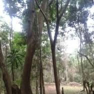 Arboleda de Santa Cruz - Ecological Lots and home sites for sale in Capira