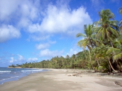 Beautiful 4 hec. Beachfront Property for Sale, Costa Abajo!
