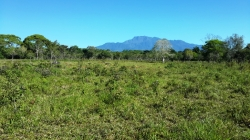 5 Hectares in Aguacate Chiriqui