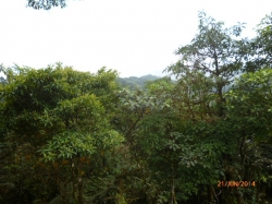Fairy-tale lot in cloud forest of Altos del María