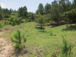 Large Lot with Great Views