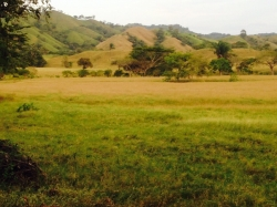 230 hectares of prime farm land in Tonosi Valley with a small house bordering the main asphalt road to tonosi