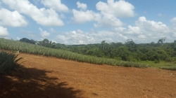 Flat working farm just 10 minutes from Chorrera