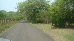 1000mt2, Roadfrontage lot, utilities, Good fishing, surf, turtles, no crowds, Guanico Abajo, Tonosi, Azuero Peninsula