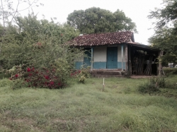 6.5 Acres of Farmland, fruit trees, small quincha house, Guarare, Los Santos Province,Azuero Peninsula