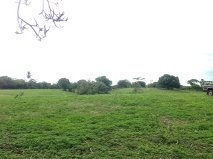 15 to 30 hectares for sale, corn, cattle and other crops, Guarare, Los Santos