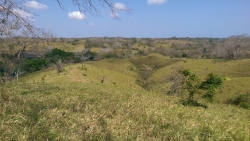 ** price reduced ** 14 HA property for sale, located 5 miles from Pedasi on the way to Playa Escondido