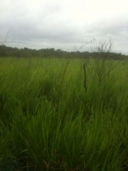 25 hectares cattle ranch, Calobre, Veraguas