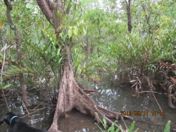 30 hectares surrounded by mangroves