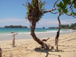 One of the last beachfront lots available on Turtle Beach in the Red Frog Beach Island Resort for sale