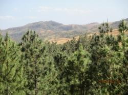 Lot with ocean view in midlands of Altos del María