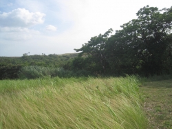 21.8 hectares near San Carlos, just 7 km from the highway