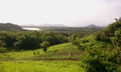 Fire sale: 2 hectares on a hill with ocean views above Boca Cha