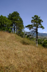 Cerro Brujo - prominent hill in central Volc�n