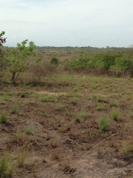 44 hectares near Interamericana in Santa Clara - at $7 per square meter!