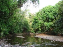 Incredible price: 335 titled hectares at $1,250 / hectare near Torio