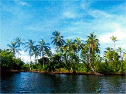 Water front wooded lot in Archipelago of Bocas del Toro Panama