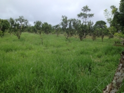 Beautiful farm in Santa Rita, in the highlands of Chiriqui