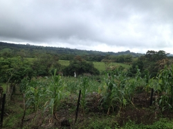 Farm in the highlands of Chiriqui