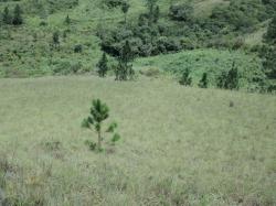 Farm with nice views in Veraguas