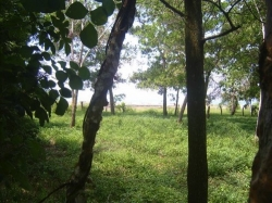 Nice flat lot in Las Lajas with ocean and river views